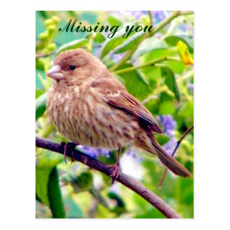 Missing you/ Any Occasion_ Postcard