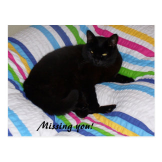 Missing You - Black Cat Postcard
