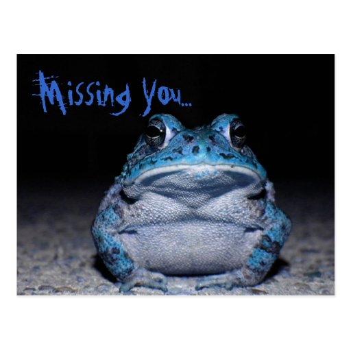 Missing You - Blue Toad Postcards