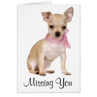 Missing You  Chihuahua Puppy Dog Greeting Card