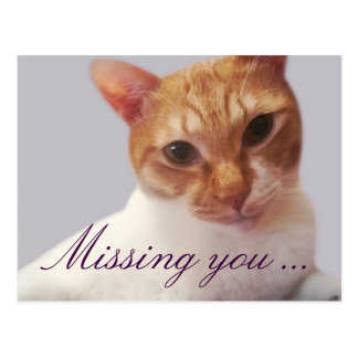 Missing You From Orange Cat Postcard