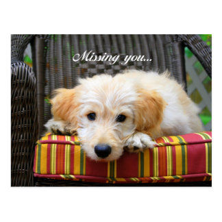 Missing You Golden Doodle Postcard