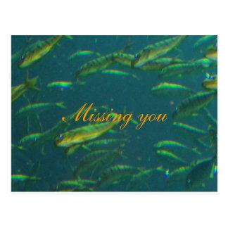 Missing you Golden School of Fish Postcard