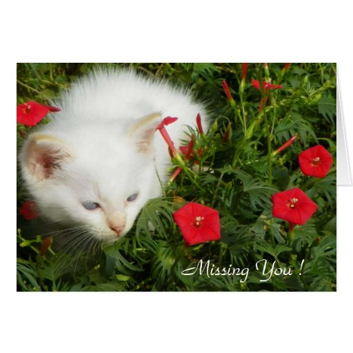 Missing You ! Greeting Card - Cute Lovely Kitty