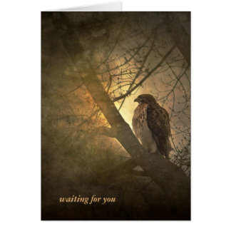 missing you-hawk in tree card
