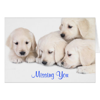 Missing You Labrador Retriever Puppies Card
