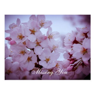 Missing you on cherry blossoms post card