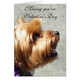 Missing you on Valentine's Yorkshire Terrier Card