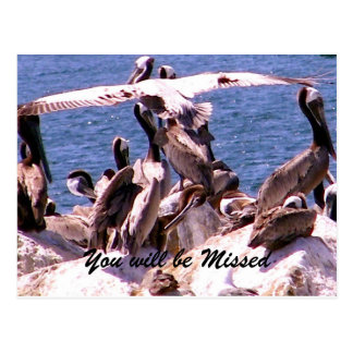 Missing You/Thank You_ Postcard Post Card