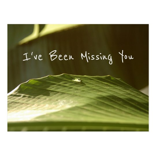 """Missing You"", Water Droplet on Banana Leaf, Photo Postcard"