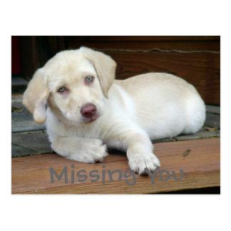 Missing You Yellow Labrador Retriever Postcard