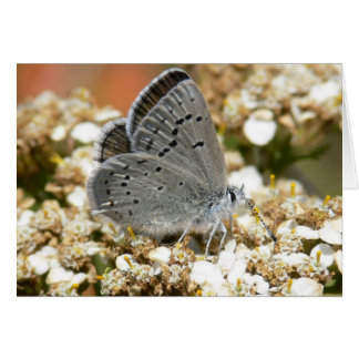 Mission Blue Butterfly Card