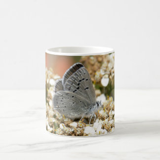 Mission Blue Butterfly Classic White Coffee Mug