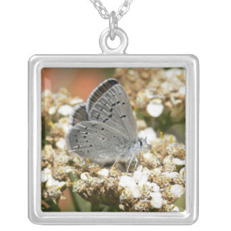 Mission Blue Butterfly Square Pendant Necklace
