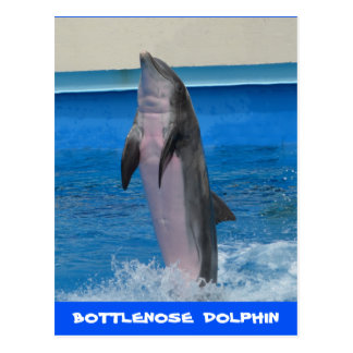 Mississippi Dolphin Postcard