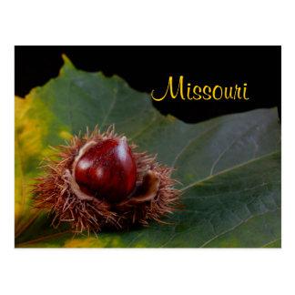 Missouri Autumn Leaf With Nut Postcard