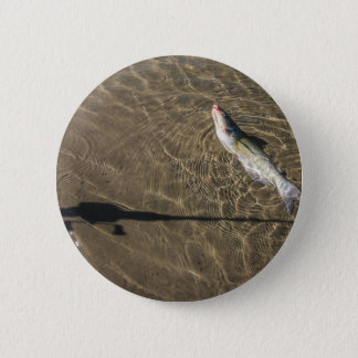 Missouri Catfish 6 Cm Round Badge