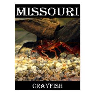 Missouri Crawfish Postcard