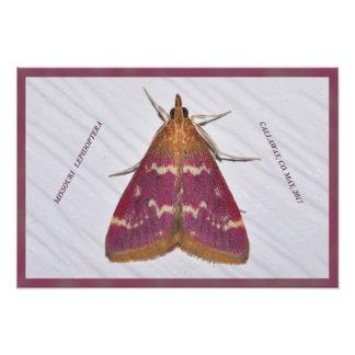 Missouri Moth. Photo Print