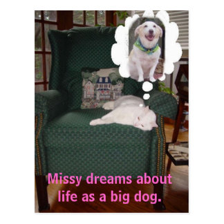 Missy dreams about life as a big dog post card
