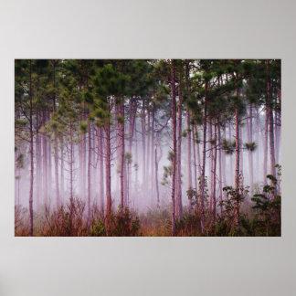 Mist among pine trees at sunrise, Everglades Poster