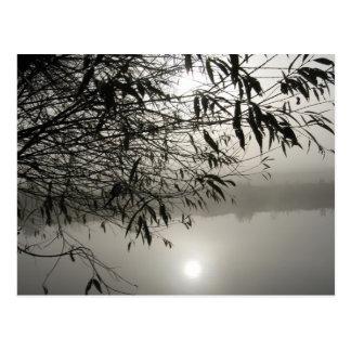 Mist and Shadow Postcard