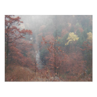 Misty Autumn Woods Postcard