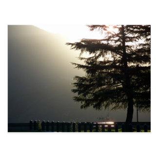 Misty Fir Tree at Shasta Dam Postcard
