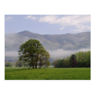 Misty meadow and Rich Mountain, Cades Cove, Postcard