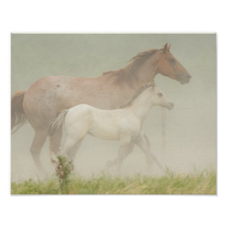 Misty Morning Mare and Foal Poster