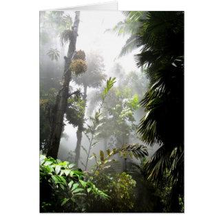 Misty Rainforest Card