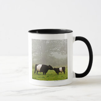 Misty scene of belted galloway cow mothering her mug