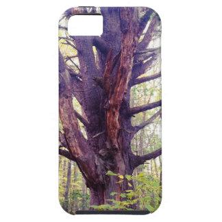 Misty Tree iPhone 5 Case