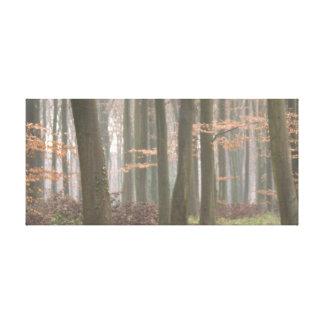 Misty walk in Clover Lane Canvas Print
