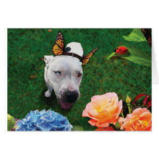 Mitzy the Mariposa, dog with butterfly wings Card