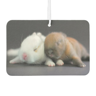Mix breed of Netherland Dwarf Rabbits Car Air Freshener
