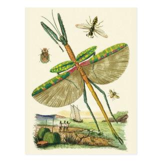 Mixed Bag O'Bugs Postcard