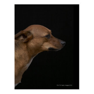 Mixed breed dog profile on black background postcard