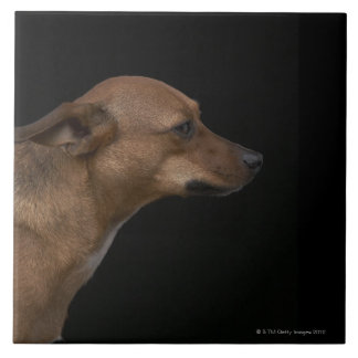 Mixed breed dog profile on black background tile