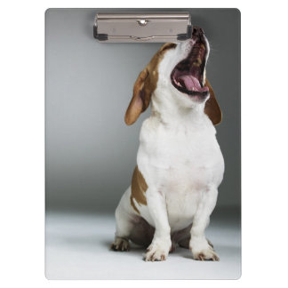 Mixed breed dog yawning clipboard
