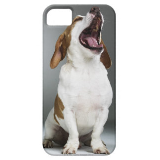 Mixed breed dog yawning, close-up iPhone 5 covers