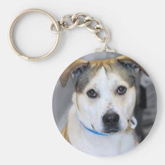 Mixed-Breed Pitbull/Yellow Labrador Keychain