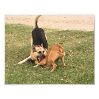 "Mixed Dogs at play 11"" x 8.5"", Kodak Photo satin"