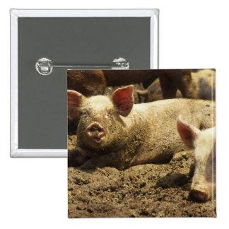 MO: Ste Genevieve, pig farm 15 Cm Square Badge