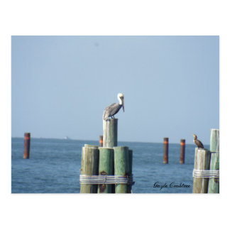 Mobile Bay pelican postcard: Gulf Coast, Alabama Postcard