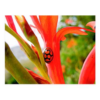 mobile devise red ladybug flower postcard