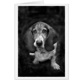 mocca the basset card