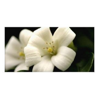 Mock Orange Blossom Flower Nature Floral Customized Photo Card