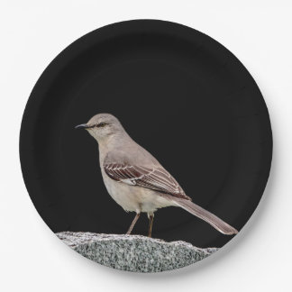 Mockingbird on a tombstone paper plate