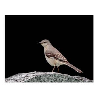 Mockingbird on a tombstone postcard